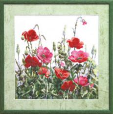 №576 Poppies in field. Catalog. Kits